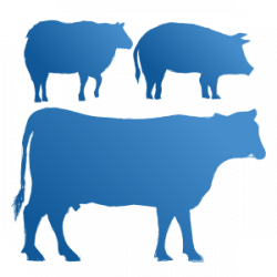 Anyone who works with animals including farmers, vets, abattoir workers are at increased risk of Q fever. Even people who live on or near farms may be at risk. There is an effective vaccine available.