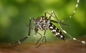 8 tips to reduce your chance of mosquito borne diseases