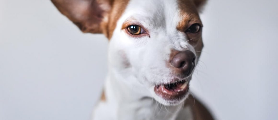 Rabies Symptoms - How to be Prevented